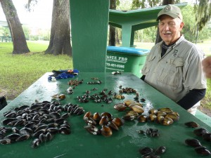 The guy in the picture is Jim Williams, who wrote the guidebook to Florida mussels. He's probably counting these species after a survey in this photo. There is text at the bottom with more info about Florida species. – Tierra Curry