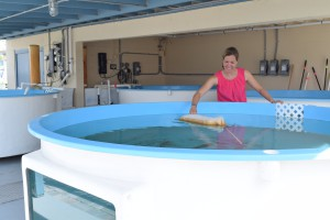 Catherine Eastman, sea turtle program coordinator, stands surrounded by tanks that will hold incoming sea turtle patients. The tanks must be individually filtered in order to have a quarantined environment for sea turtles with the Fibropapillomatosis (FP) virus. CREDIT