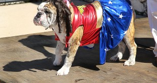 "Cosmo competes in the Drool and Ghoul Howl-O-Ween costume contest dressed as Wonder Woman. Cosmo won ""top dog"" at the party hosted by the City of Gainesville Parks, Recreation and Cultural Affairs Department. Lauren Rowland/WUFT News"