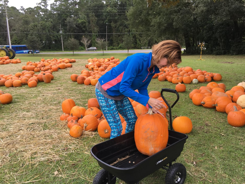 Gainesville Church of God member Kristen Crisp moves a larger pumpkin into the wagon to flip. The pumpkins have to be flipped every other day so they don't rot, something Crisp said she wasn't aware of until associate pastor Ron Sanderson told her today was the day to flip them.