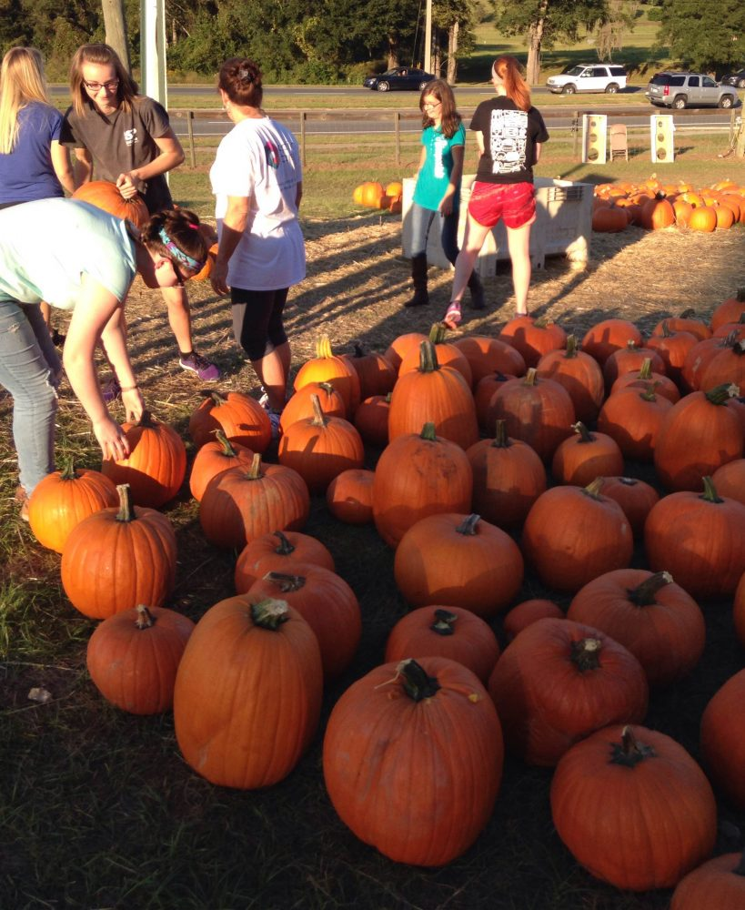 Wuft in photos: pumpkin frenzy hits alachua county – wuft news.