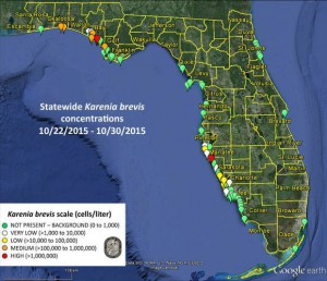 Satellite images show that Karenia Brevis, the Florida red tide organism, has been detected in higher-than-normal concentrations in Northwest Florida. Photo courtesy of the Florida Fish and Wildlife Conservation Commission.