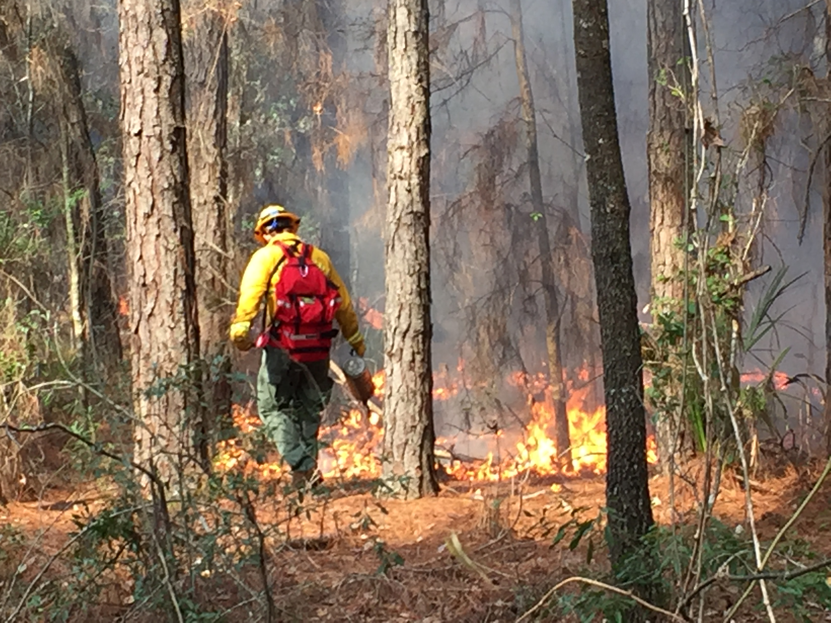 Controlled Burn In Gainesville Brings Warmth To Dignity