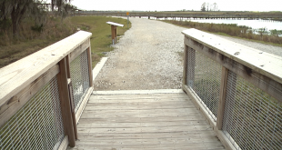 A boardwalk at Alachua County's Sweetwater Wetlands Park turns into gravel. Visitor Phyllis Saarinen said her husband's wheelchair got stuck in the gravel on Feb. 14. (Olivia Courtney/WUFT News)