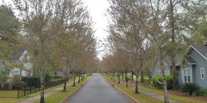 A proposed change to the development code would allow developers to use large canopy trees, like live oaks, instead of smaller trees. (Lucas Wilson/WUFT News)