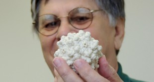 Dr. Nicolas Muzyczka stands in his office at the University of Florida with a 3D printed version of an AAV (Adeno-asociated virus), what his research and patents focus on. (Mireillee Lamourt/WUFT News)