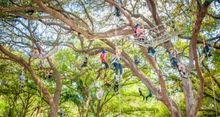 Kids climb and rappel from trees at a previous Earthfest at Arbor Day in the Great Outdoors event at Tuscawilla Park in Ocala. This activity will be featured again at this year's event.