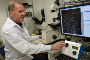 Robert Burne, Ph.D., the associate dean for research and chair of the UF College of Dentistry's department of oral biology, examines some of the research about the strand of bacteria that could lead to a way to prevent cavities. (Photo courtesy of University of Florida Health)