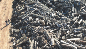 An image entered as an exhibit in Wood Resource Recovery's lawsuit trial. It shows two employees walking along the enormous stockpile of wood the company built to grind down into burnable chips for the biomass plant in Gainesville. (Courtesy: Bill Gaston/Wood Resource Recovery)