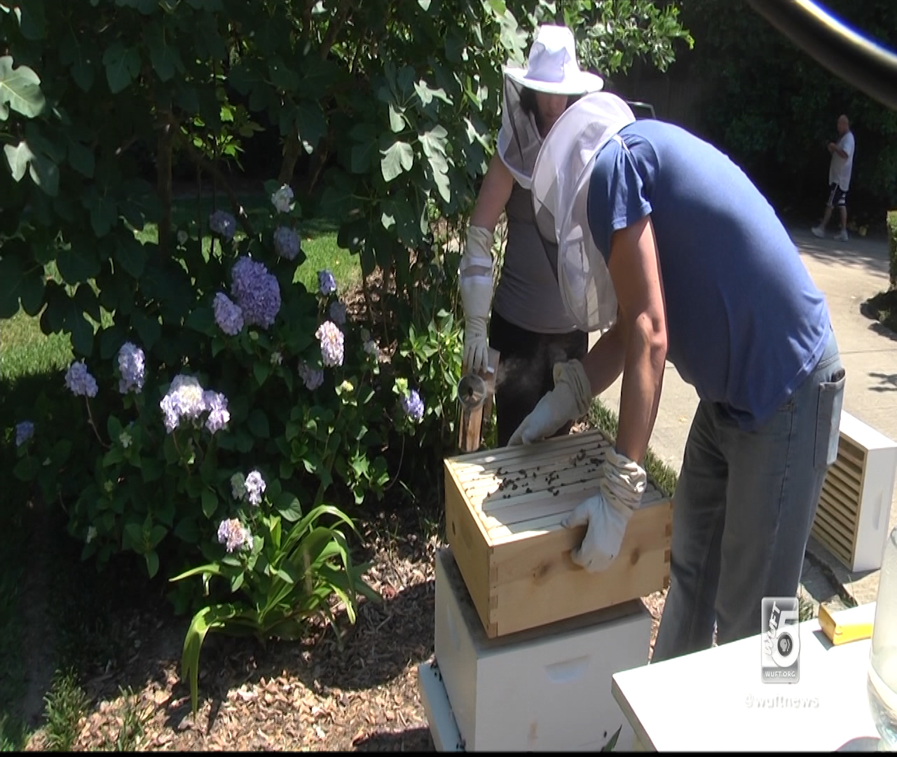 Backyard Beekeeping Hobby Is On The Rise in Gainesville ...