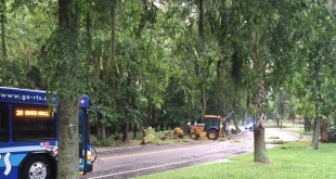 Clean up on the University of Florida campus after storms came through on June 10. (TJ Pyche/WUFT News)