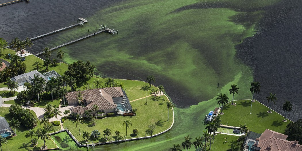 CDC to study health risks resulting from Florida's toxic algal blooms