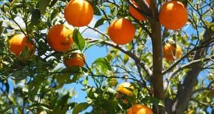 oranges-1117628__340