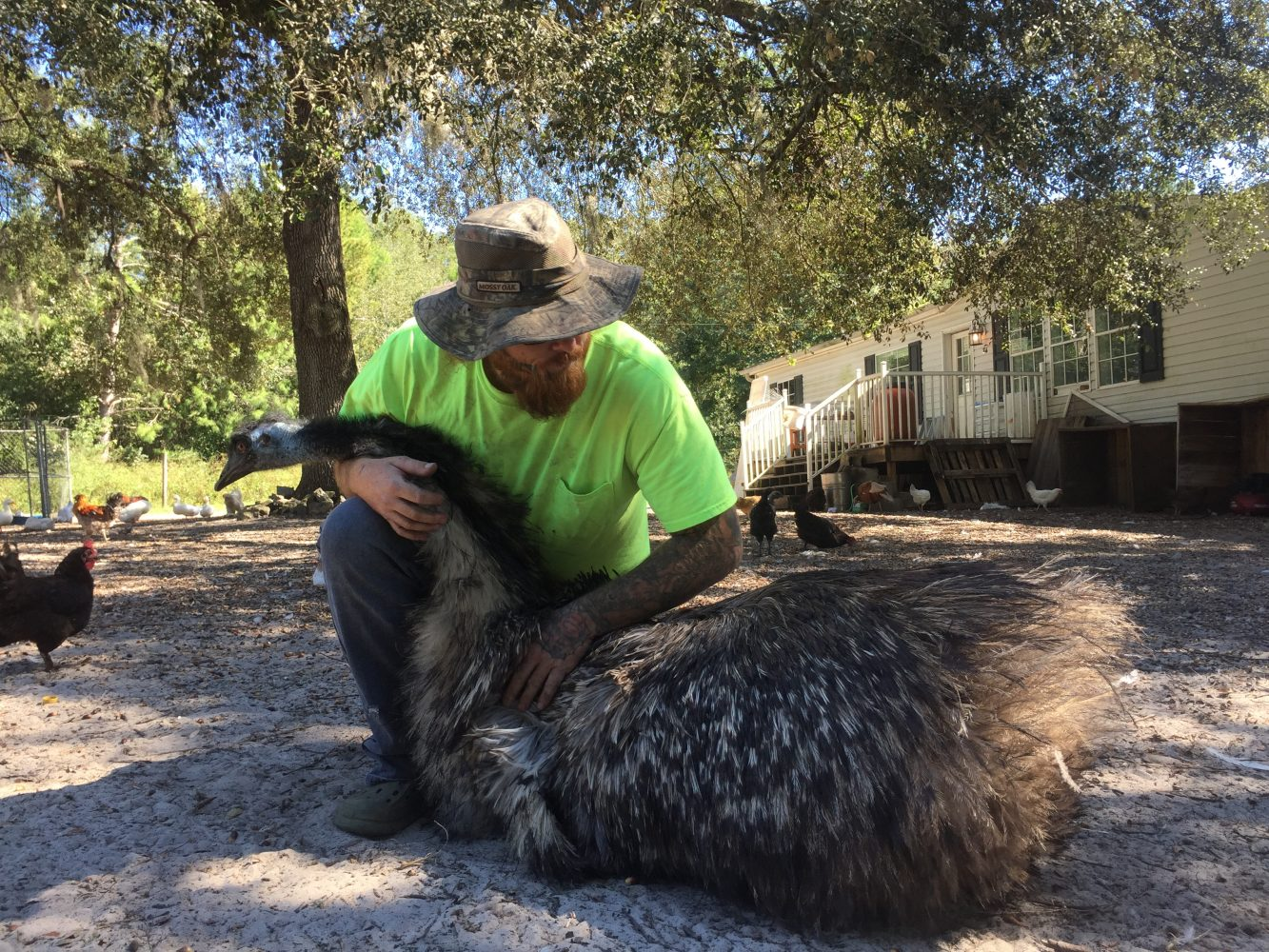 Rathaypets one of his emus, Baby Girl, Saturday. Rathay's farm is a licensed hatchery and sells emu and other eggs. (Sara Girard/WUFT)