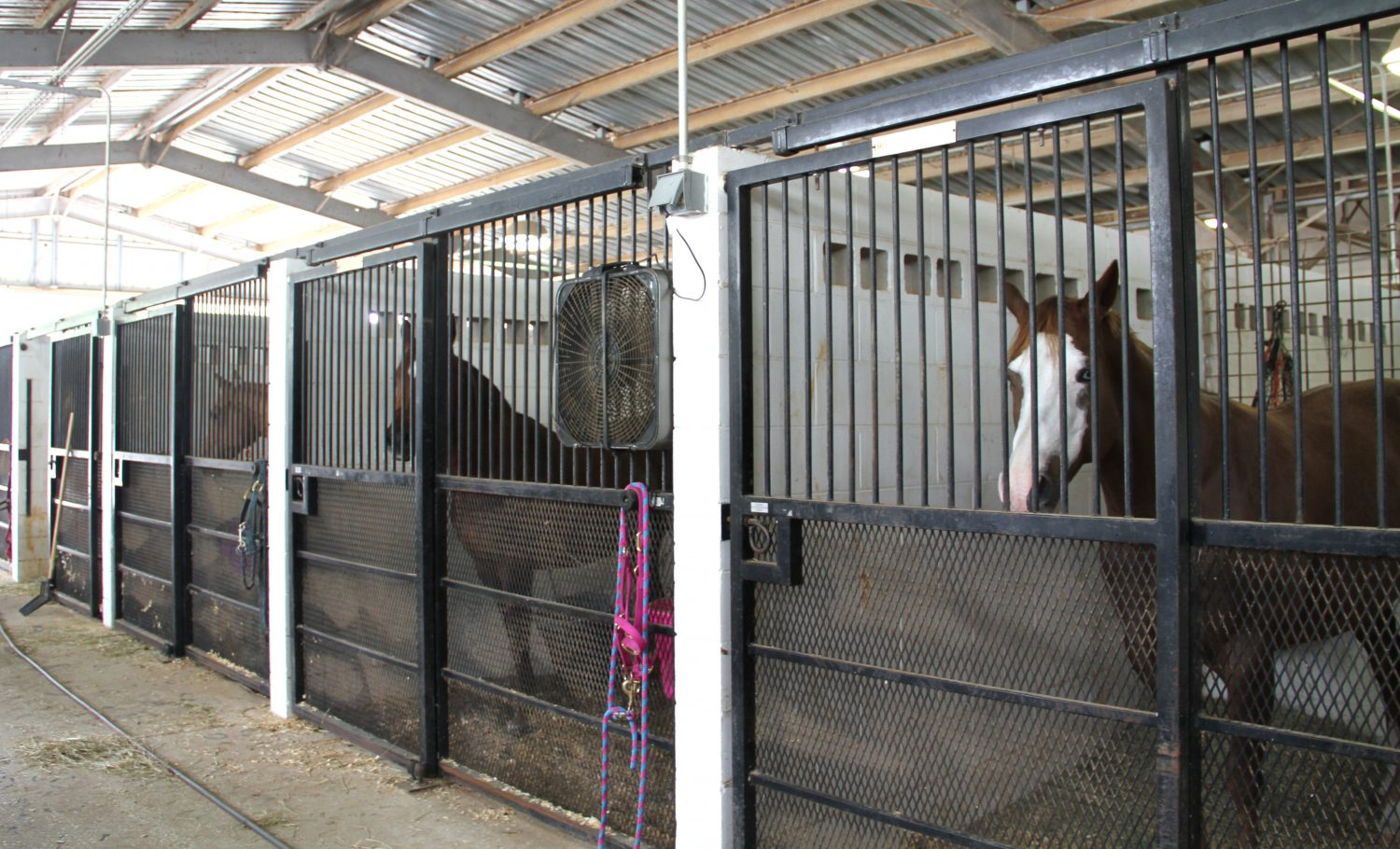 The Southeastern Livestock Pavilion in Ocala is offering free stalls Thursday October 6 for horse owners to protect their horses from Hurricane Matthew. Horse owners came from different parts of Florida to make sure their horses are safe. (Cassandra Alamilla/WUFT News)