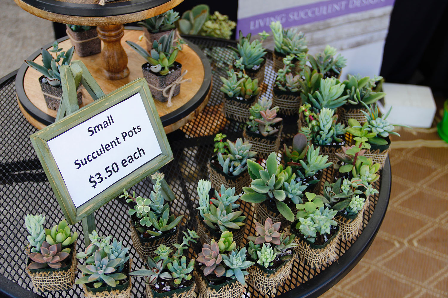 Dee Mullen's small succulents are displayed at her booth. (Lauren Gandy/WUFT News)