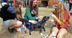 University of Florida students Elizabeth Bellersen, Emma Blan and Madelyn Corcoran play with a puppy at the Plaza of Americas on UF's campus in 2016. Under a new bill, top-performing students in Florida could soon have all their tuition covered. (File/WUFT News)