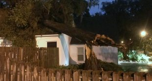 A downed tree fell on a house located on Second Avenue after severe weather hit North Florida on Sunday. The tree was reported by a UF student around 5:30 p.m. Sunday.