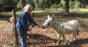 Alexandra Segal, 63, at her Melrose home with her pet donkeys. She says that a two-hour parking limit at the civil courthouse in downtown Gainesville caused her to worry about her parked car during recent jury duty. (Mercedes Leguizamon/WUFT News)