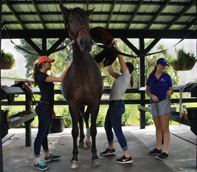 Western - UF Equestrian Club