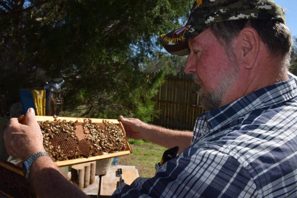 Florida Considers Increasing Penalty For Bee Colony Theft