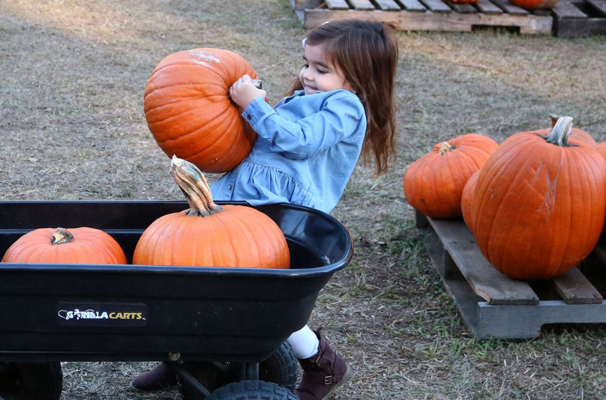 Gainesville church to donate pumpkin proceeds to feeding centers.