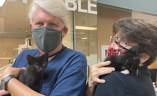 Jean Cibula and David Nessl hold their kittens for the first time after officially adopting them earlier this month.