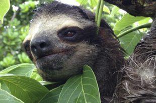 sloth-ep-main