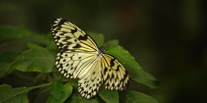 Sex, Lies and Butterflies – Wednesday at 8 p.m.