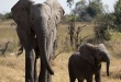 NATURE: Naledi: One Little Elephant – Wednesday at 8 p.m.