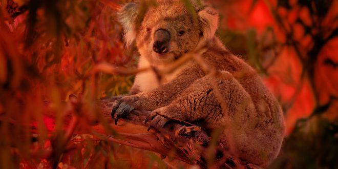 NATURE: Australian Bushfire Rescue – Wednesday at 8 p.m.